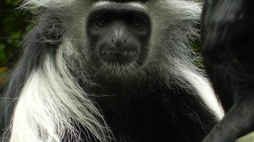 Ilmainen kuvapankkikuva tunnisteilla apina, breezey, eläin, hämmästyttävä