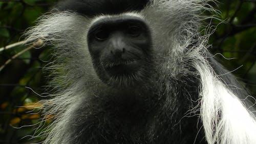 Ilmainen kuvapankkikuva tunnisteilla apina, hämmästyttävä, Hassu, hauska