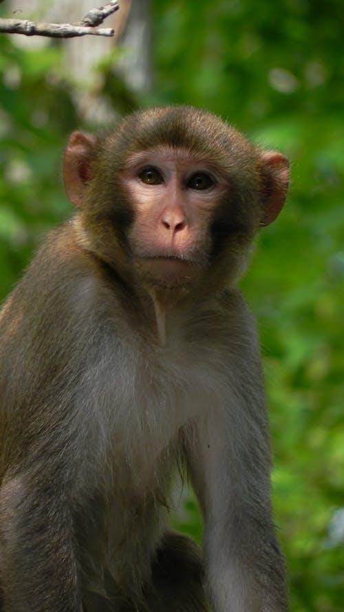 Ilmainen kuvapankkikuva tunnisteilla apina, hämmästyttävä, hauska, luontokuvaus