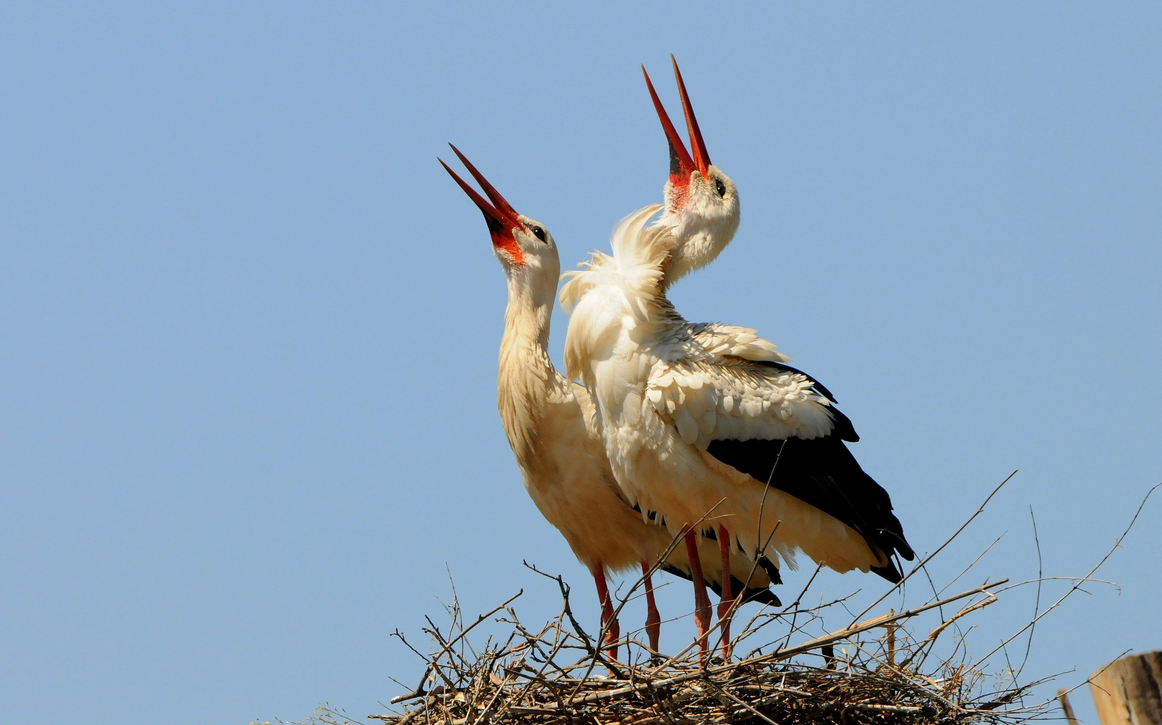 Free stock photo of success, stork, nest