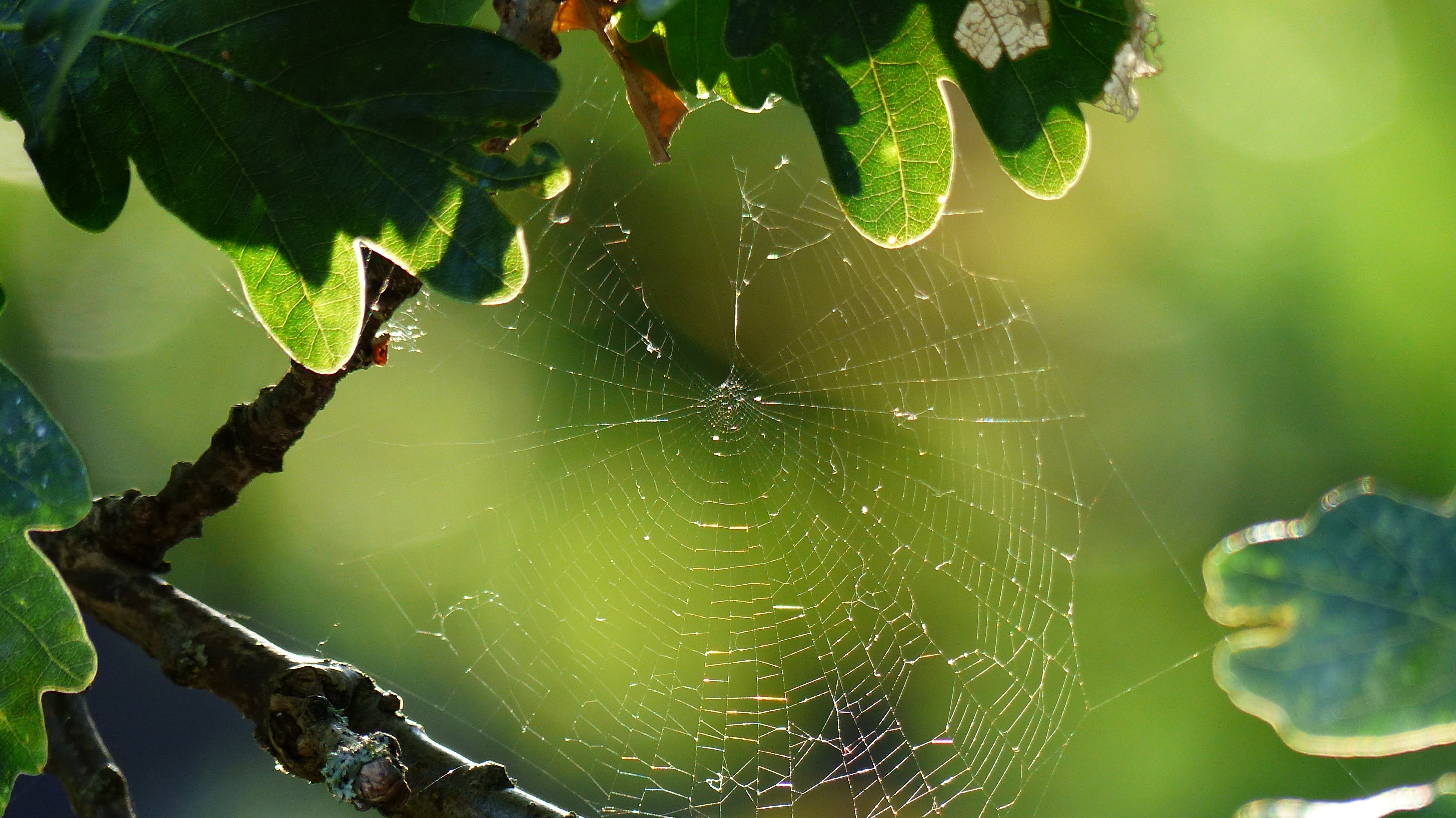 Free stock photo of autumn, rain, spiderweb