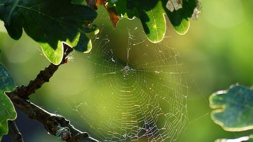 Foto profissional grátis de chuva, teia de aranha
