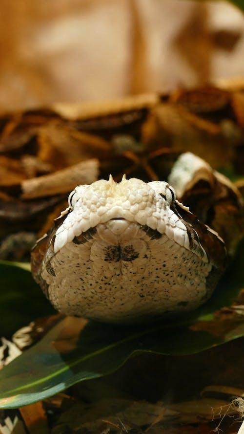 Ilmainen kuvapankkikuva tunnisteilla anmäl, käärme, myrkyllinen, villieläimet