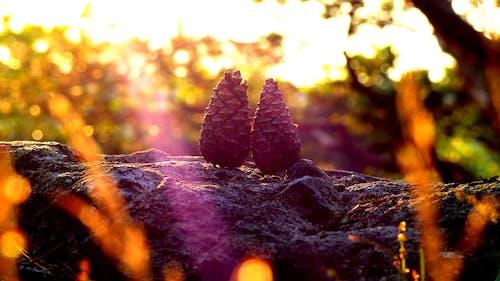 Foto profissional grátis de pinheiro, romântico