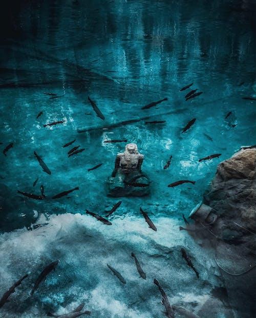 Darmowe zdjęcie z galerii z blausee, jezioro, ławica ryb, podwodny