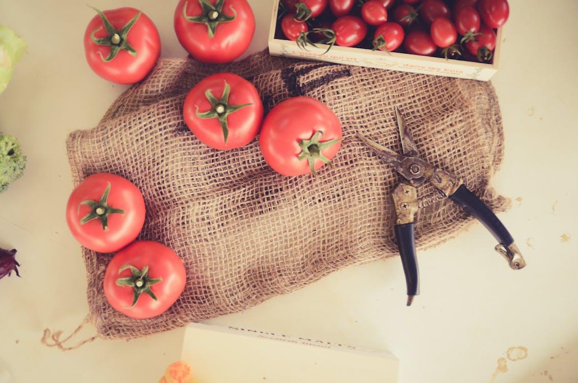 cà chua, nông trại, trái cây