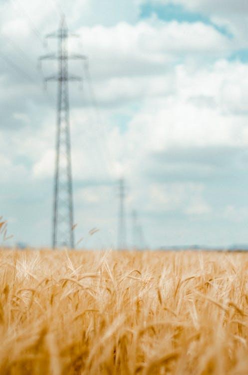 farma, hřiště, kukuřice