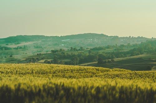 Immagine gratuita di bel paesaggio, paesaggio, terreno edificabile