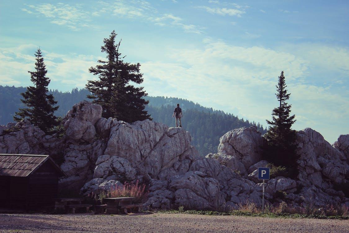 alpinista, drzewa, drzewa iglaste