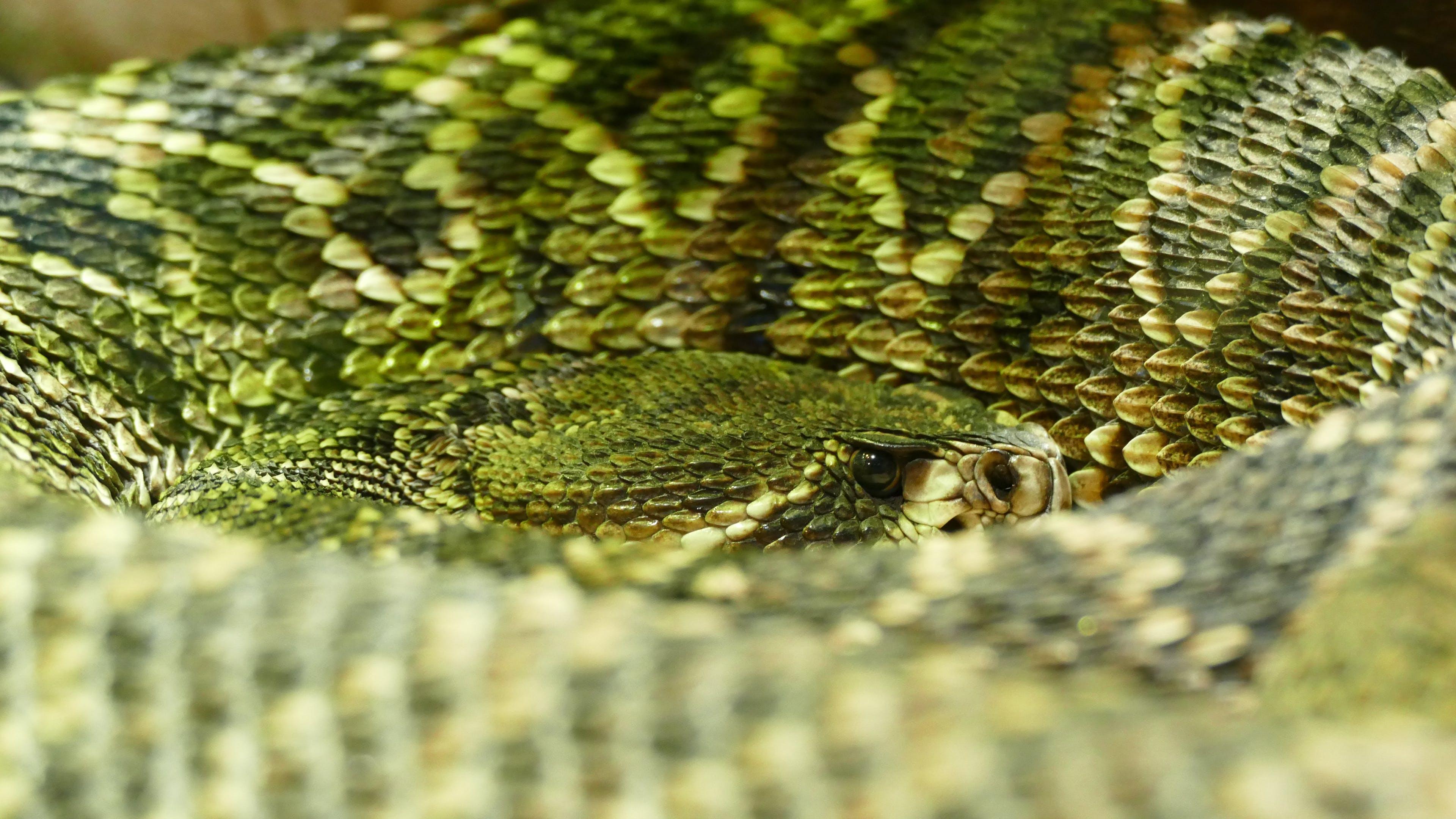 Free stock photo of nature, pattern, animal, dangerous