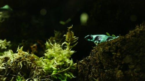 Foto profissional grátis de amazona, peçonhento, rã