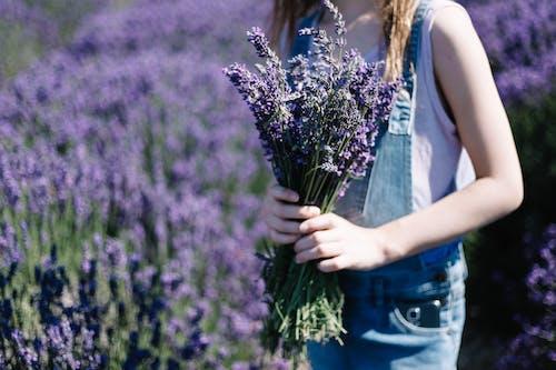 Foto stok gratis aromaterapi, aromatik, berkembang, bidang