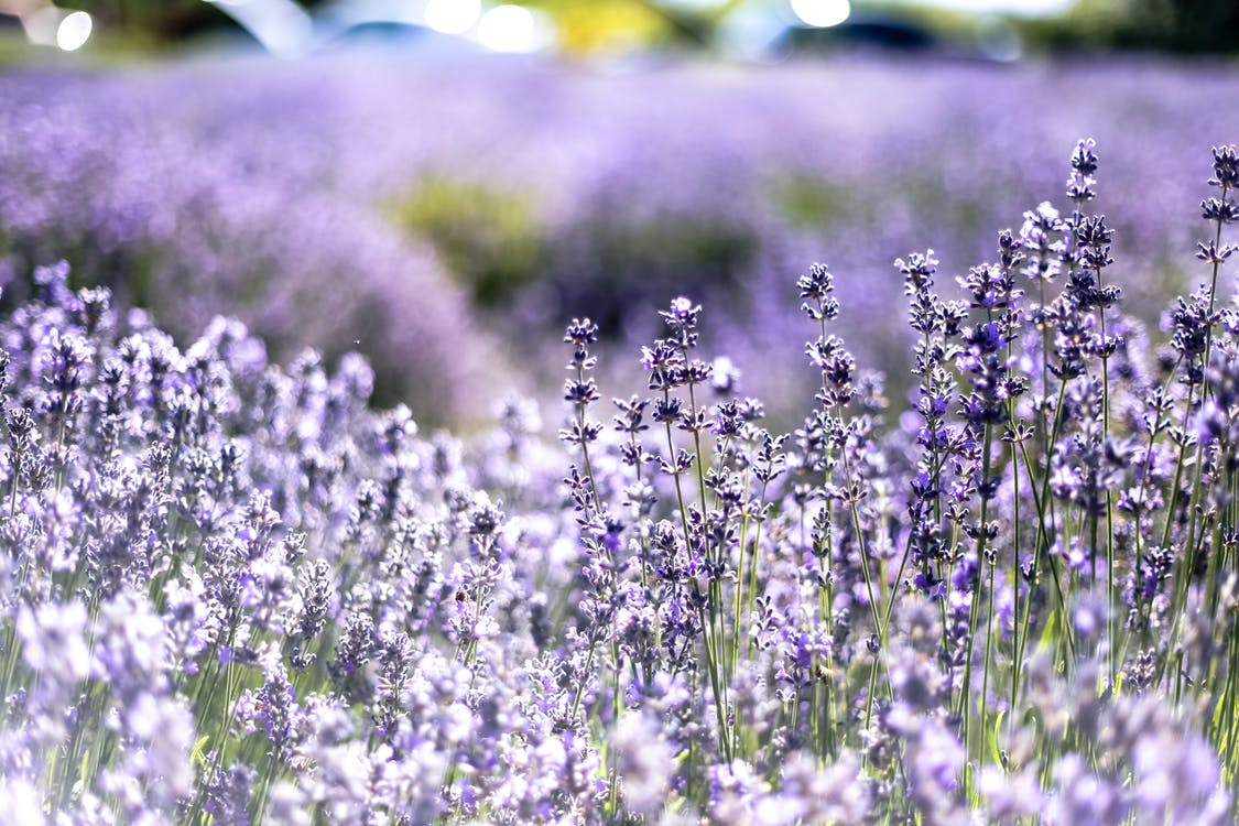 Aromaterapi, aromatisk, bane