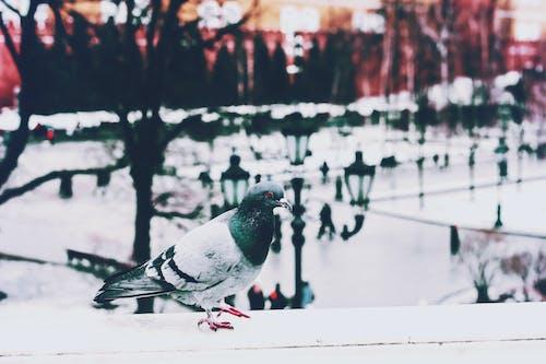 Foto stok gratis bangsa burung, bertengger, binatang, bulu