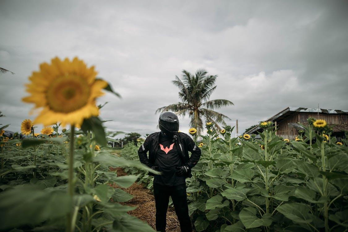 agriculture, clairière, culture