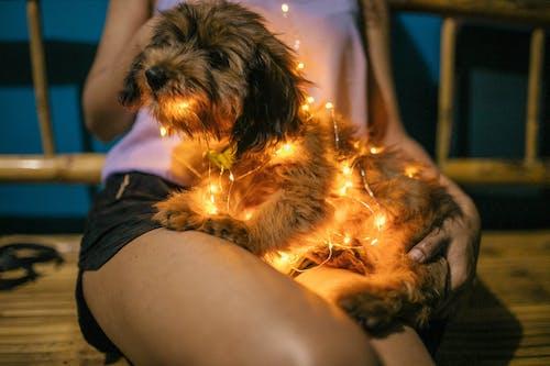 Бесплатное стоковое фото с рождественские огни