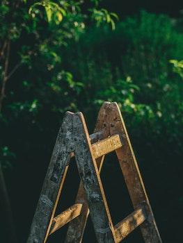 Free stock photo of art, garden, trees, blur
