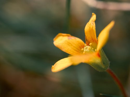 Бесплатное стоковое фото с лето, максросъемка, природа, сад