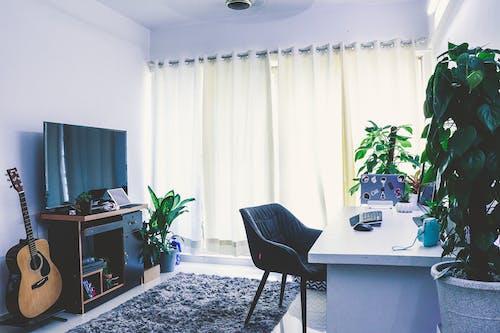Free stock photo of acoustic guitar, desk, desktop, green plants