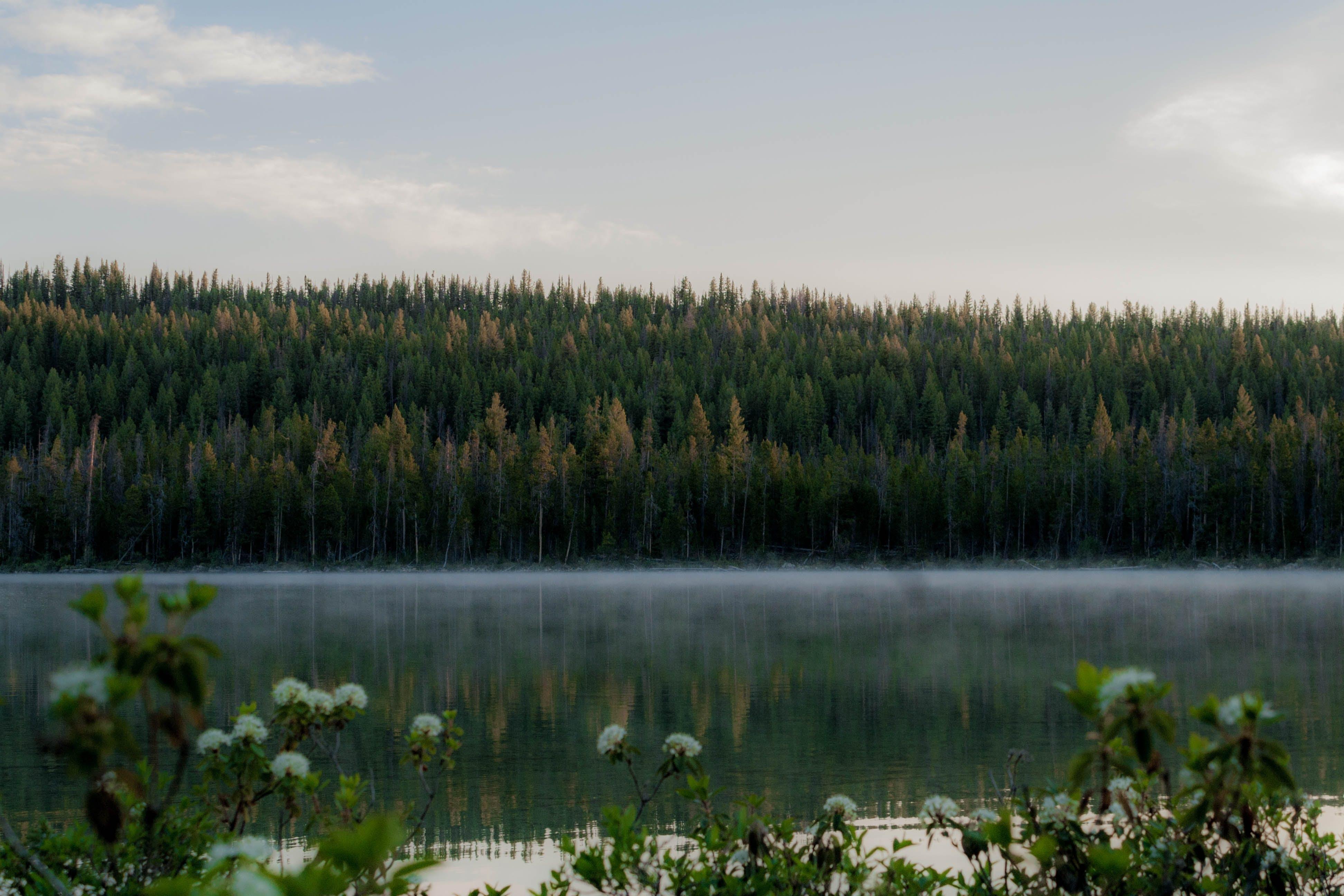 fog, lake, mist