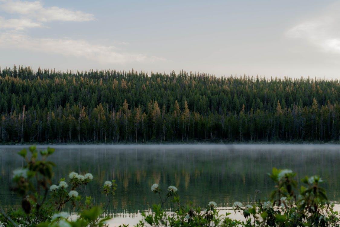 fredelig, natur, naturskjønn