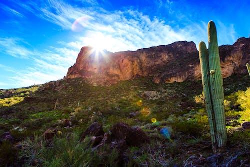 Fotobanka sbezplatnými fotkami na tému kaktus, kopec, krajina, ľahký