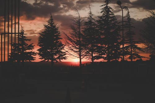 Free stock photo of black, sun, sunset, tree