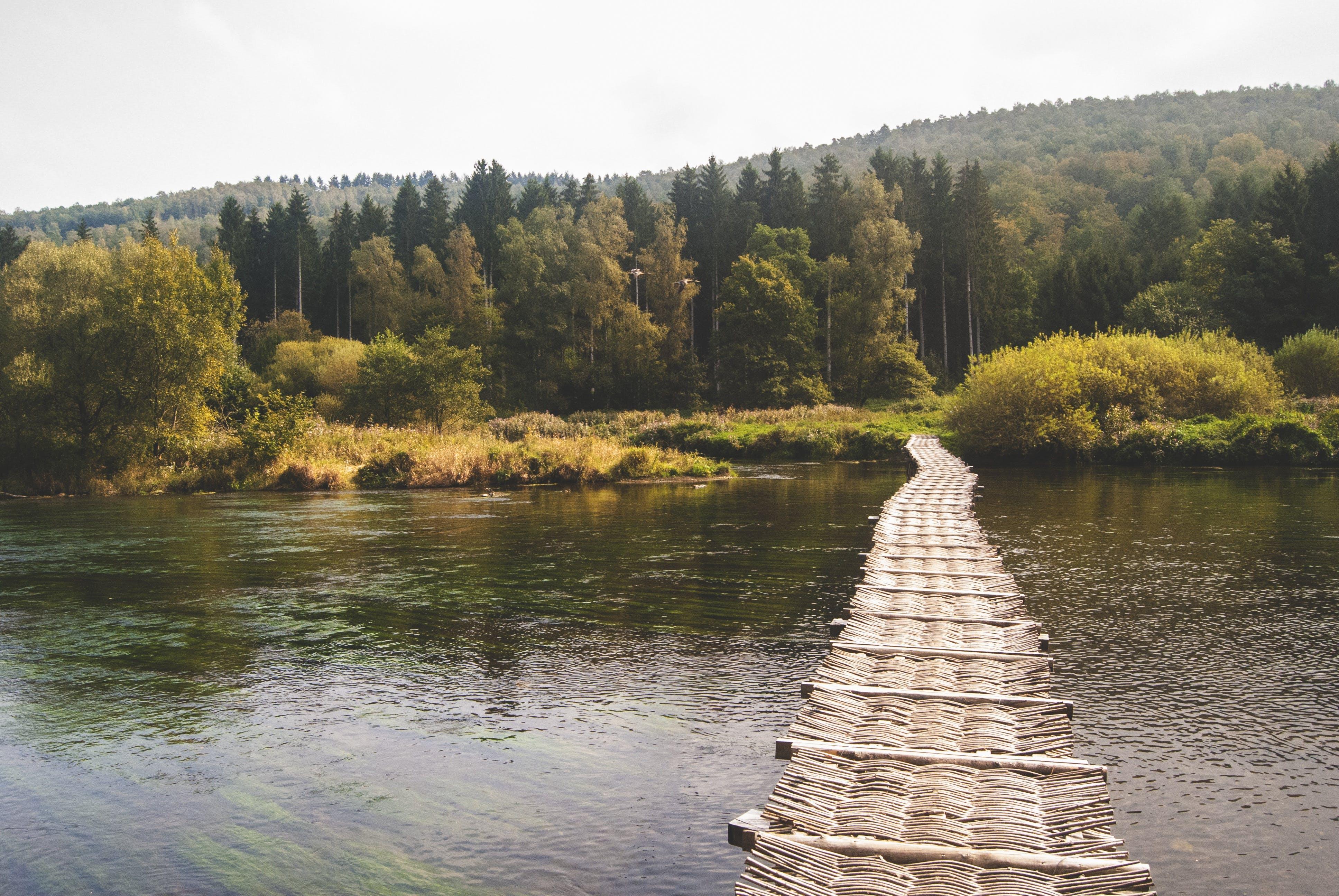 ブリッジ, 小径, 木, 森の中の無料の写真素材