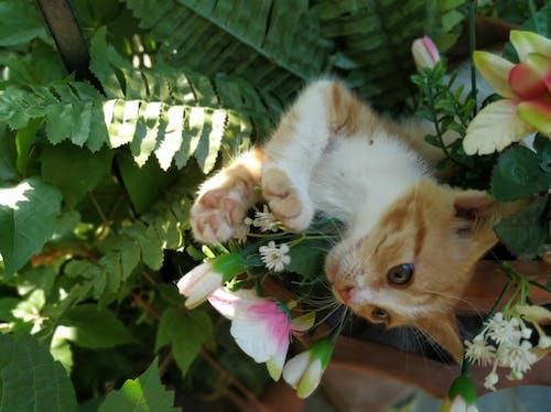 Free stock photo of animals, cat, cute, kitten