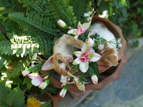 Free stock photo of animals, cat, cute, flowers