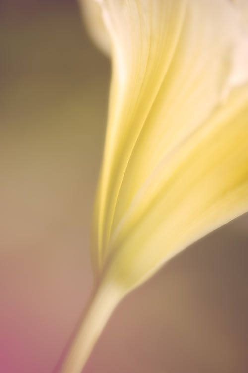Photos gratuites de fleur, hémérocalle, photo macro