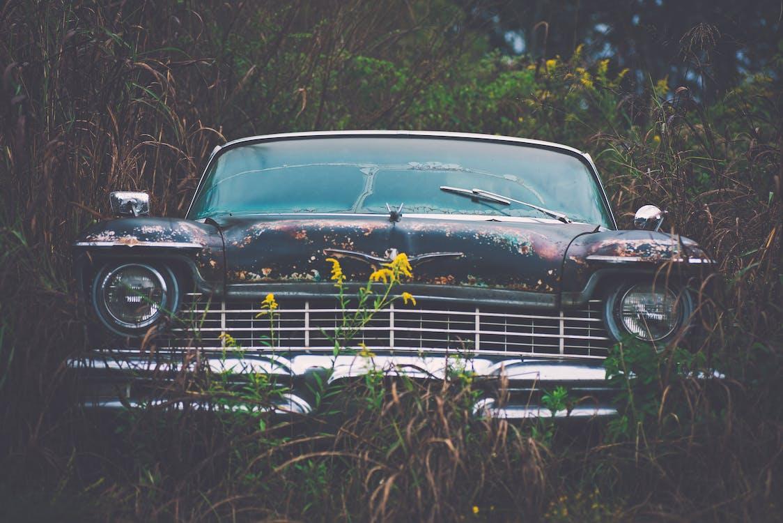Vintage Car Parked Besides Green Plants