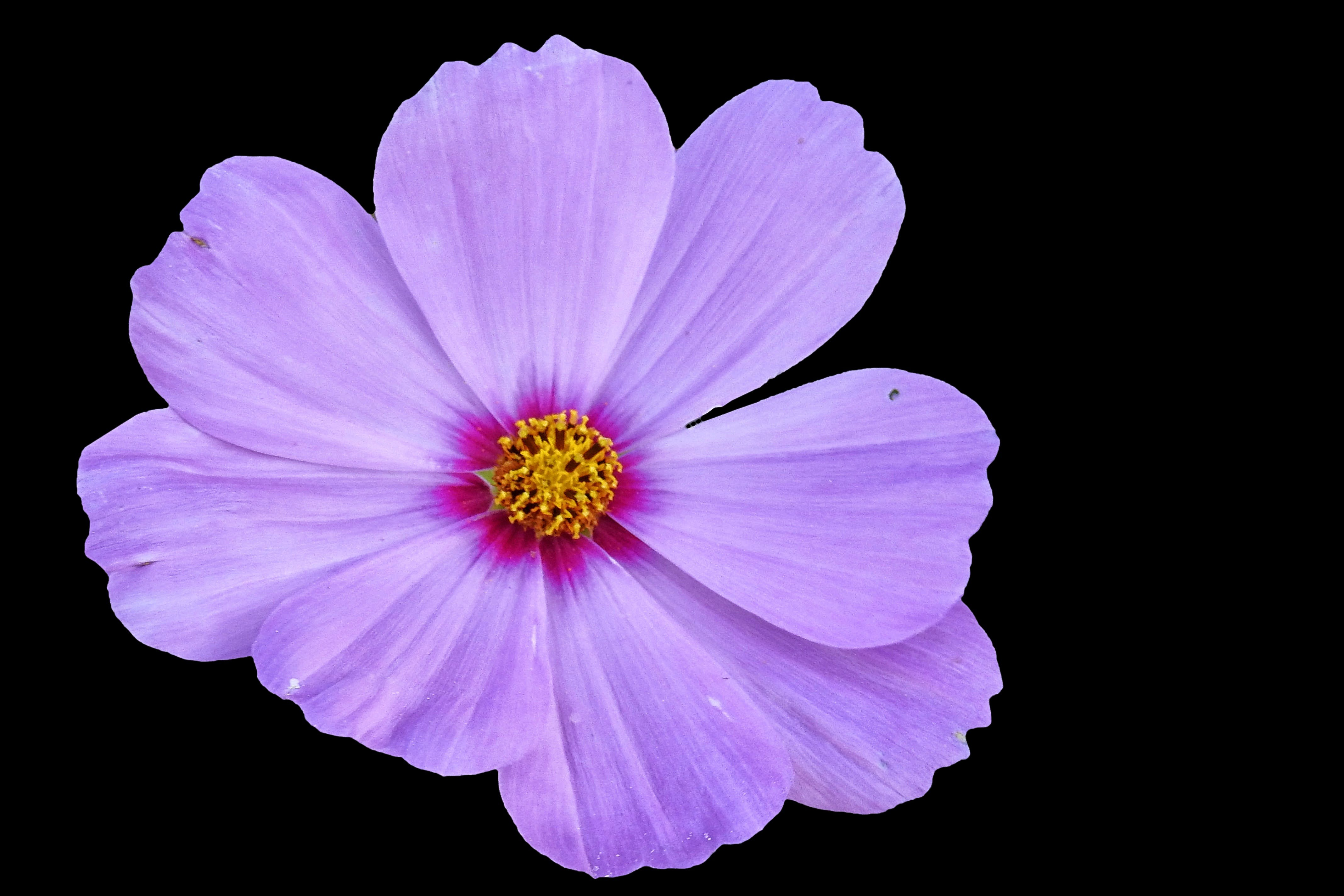 Free stock photo of summer, garden, flower, bloom