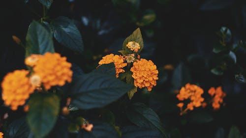 Free stock photo of flower