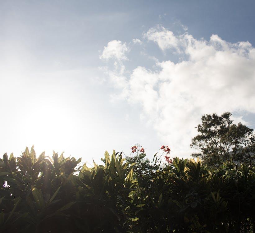 auringonnousu, auringonvalo, kasvi