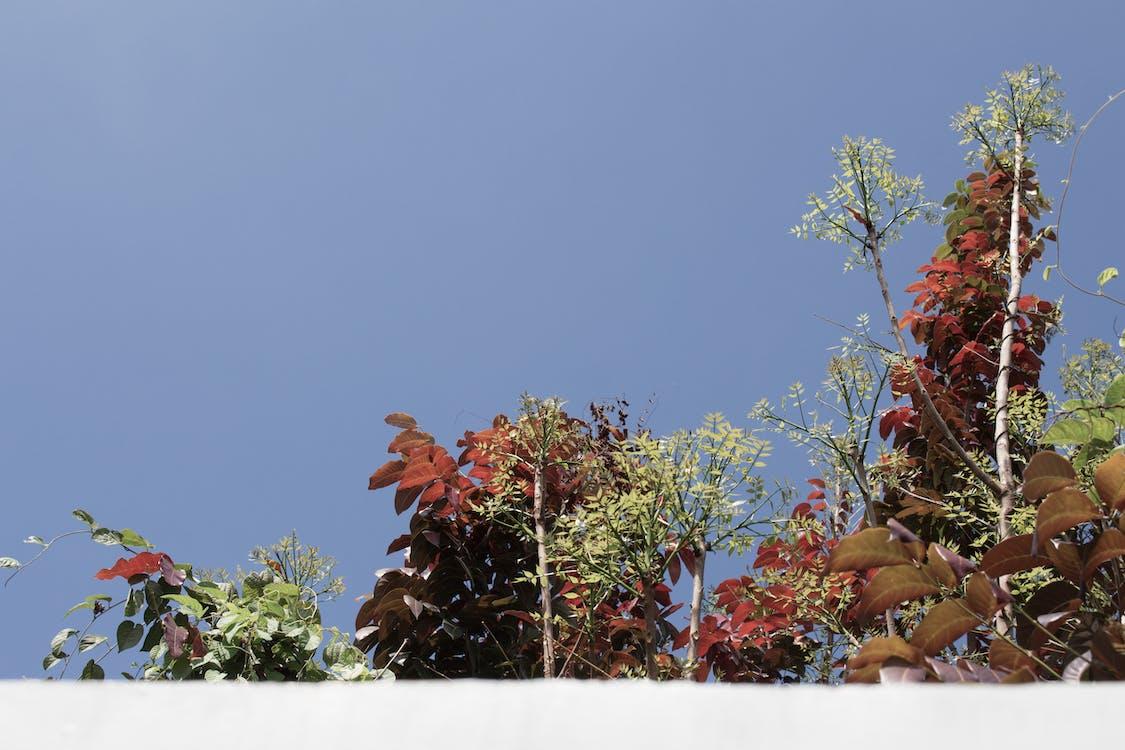 auringonvalo, kasvi, kasvit