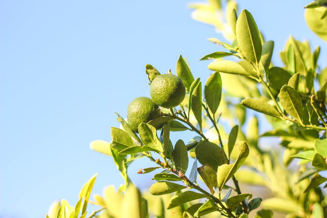 appelsiini, auringonvalo, hedelmä