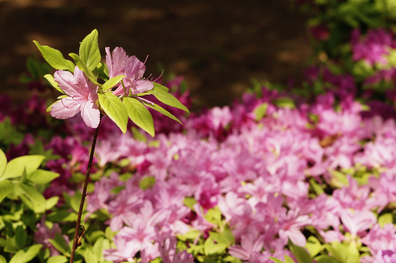 Free stock photo of bud, cosmos, dandelion, flowers