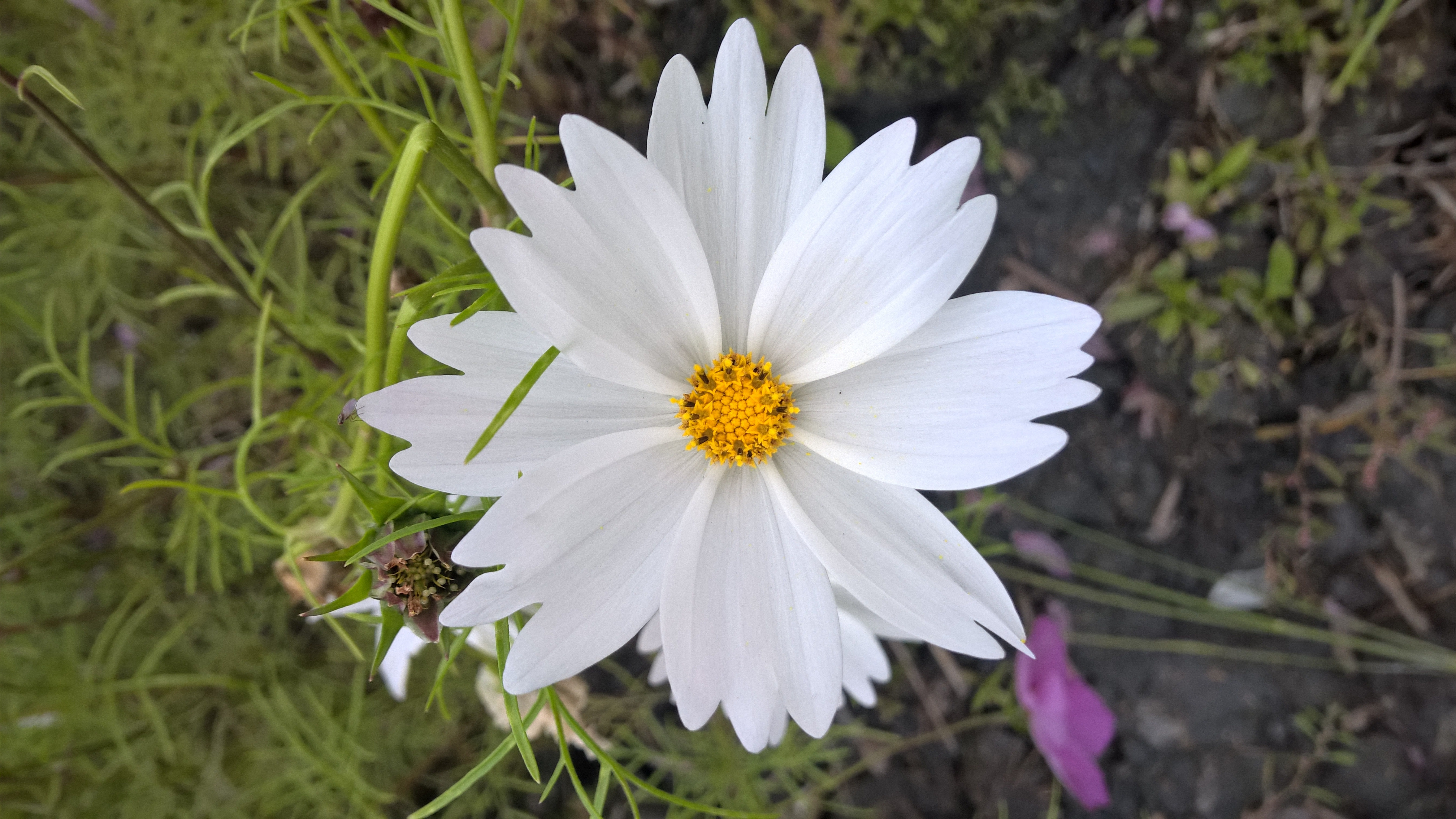Foto Stok Gratis Tentang Bunga Hijau Kacang