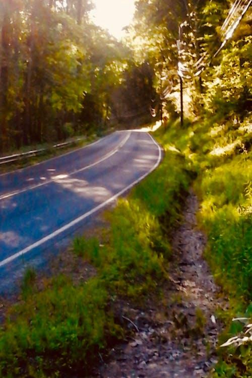 Fotobanka sbezplatnými fotkami na tému cesta, slnečné svetlo, stromy, večer spríjemnou atmosférou