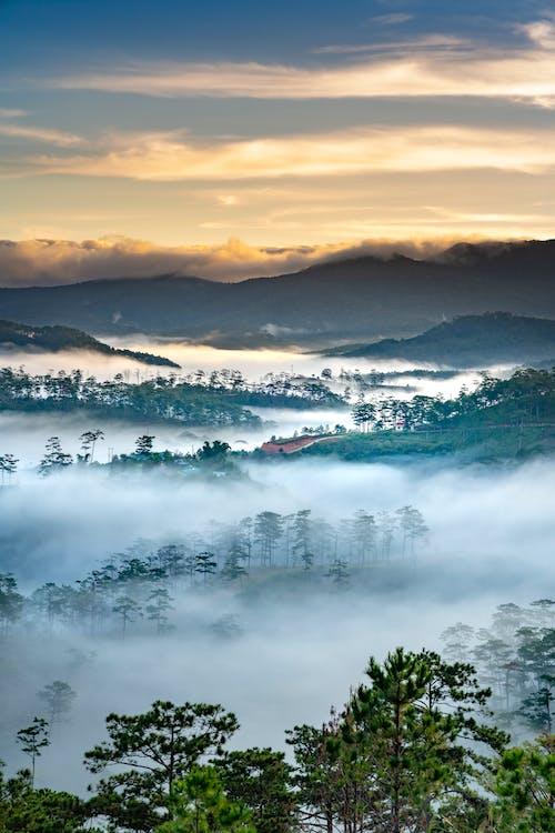 คลังภาพถ่ายฟรี ของ ต้นไม้, ตะวันลับฟ้า, พระอาทิตย์ขึ้น, พร่ามัว
