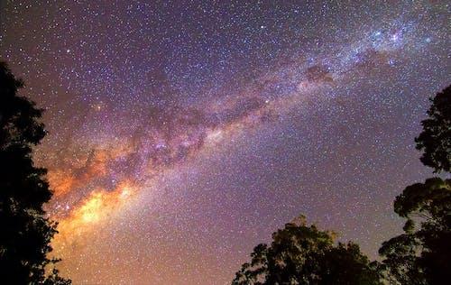 Darmowe zdjęcie z galerii z astronomia, ciemny, droga mleczna, drzewa