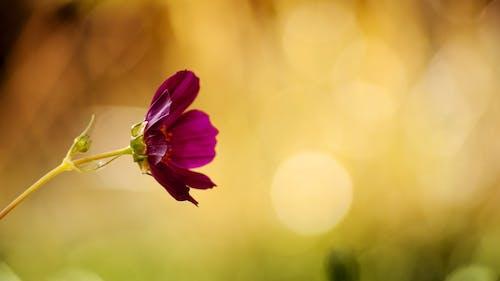 Foto stok gratis alam, berkembang, bunga, flora