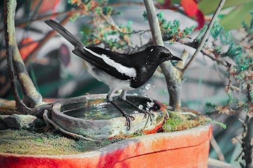 Imagine de stoc gratuită din animal, aviar, cocoțat, pasăre