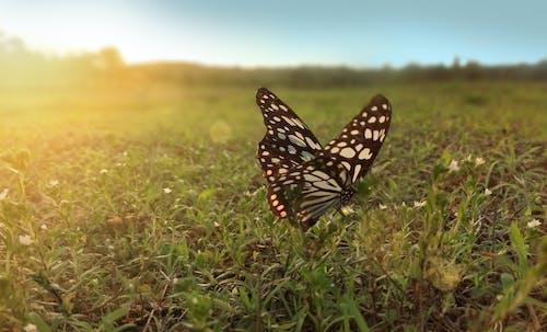 Gratis stockfoto met gras, vlinder, zonlicht