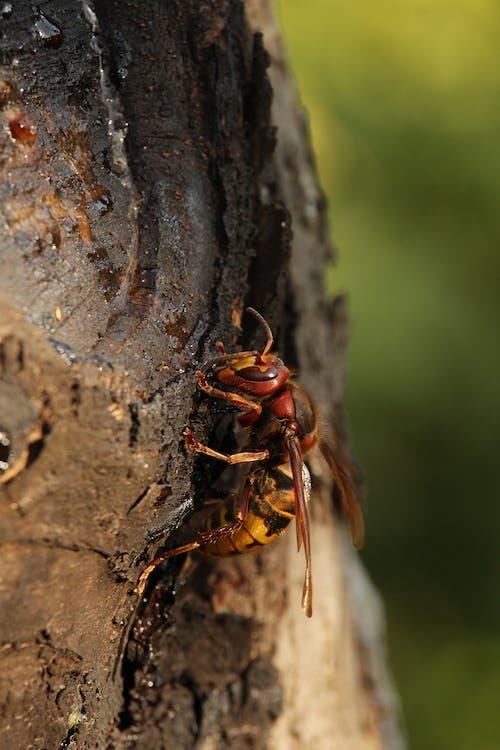 Ilmainen kuvapankkikuva tunnisteilla herhiläinen, hyönteinen