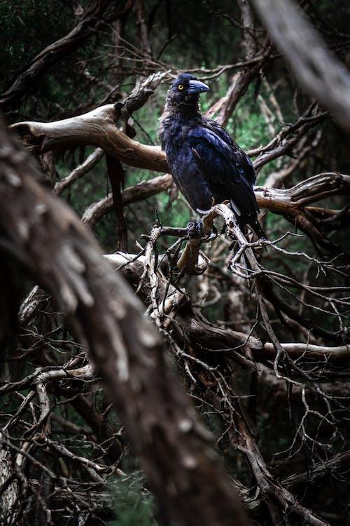 ворона, деревья, животное