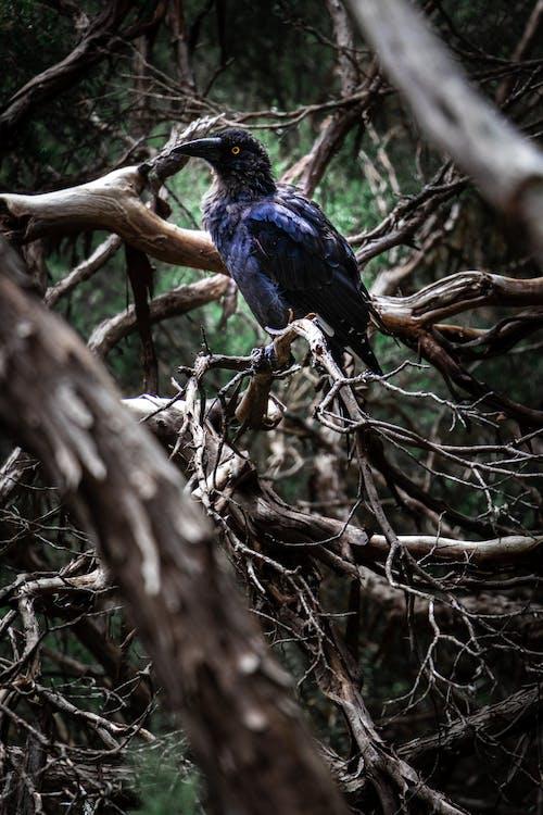 Бесплатное стоковое фото с ворона, деревья, животное, красота в природе