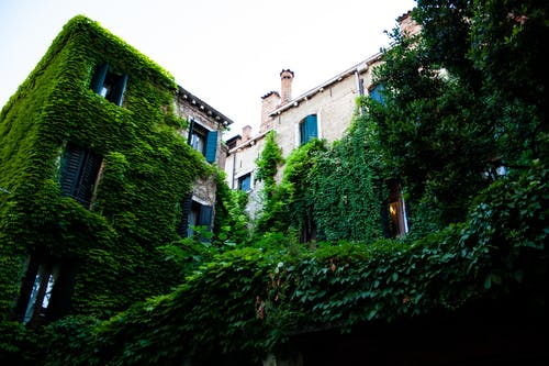 Free stock photo of bulding, green, ivy, venice