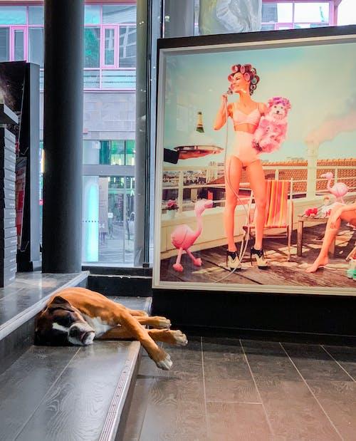 Безкоштовне стокове фото на тему «кроки, собака, собачий, тварина»